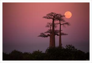 allee-des-baobabs-2017