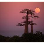 Allée des Baobabs 2017